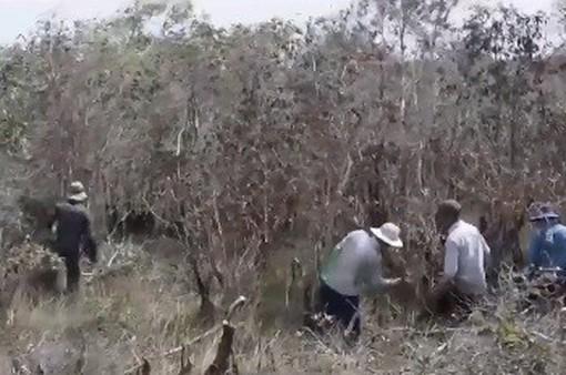 Người dân ngang nhiên vào khu bảo tồn chặt phá cây rừng