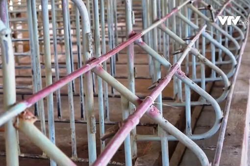 Khó khăn của người nuôi lợn vùng dịch
