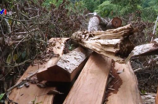 Thực tế buồn ở Bắc Kạn: Cả thôn rủ nhau... phá rừng