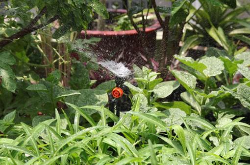 Tự lắp đặt dàn tưới nước cho vườn rau tại nhà