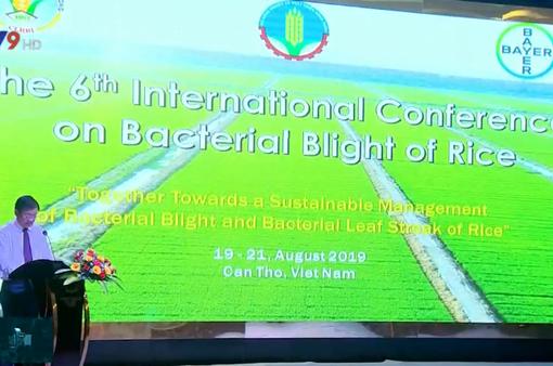 Hội nghị quốc tế về bệnh bạc lá trên lúa