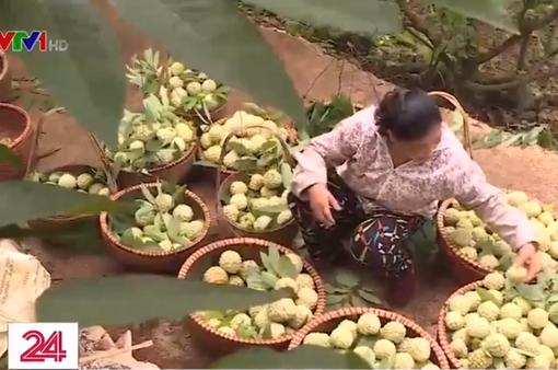 Na Chi Lăng - Quả ngọt từ sự sáng tạo của nông dân