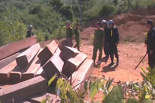 Bất thường phía sau vụ bắt quả tang phá rừng quy mô lớn tại Đăk Lăk