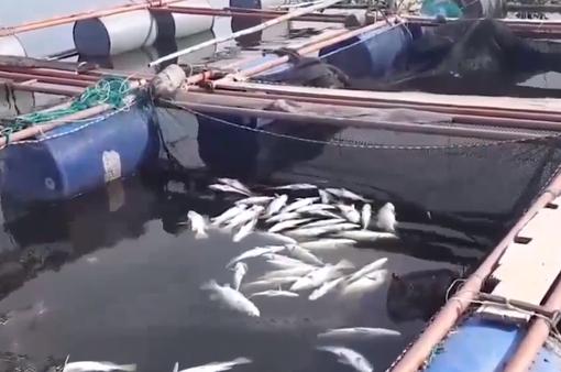Hà Tĩnh: Kết luận nguyên nhân cá chết hàng loạt