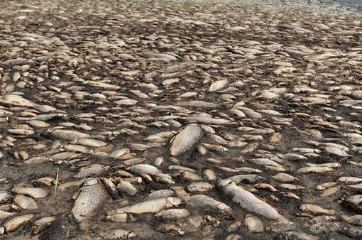 Biến đổi khí hậu: Cá chết hàng loạt tại hồ Koroneia của Hy Lạp do nhiệt độ tăng
