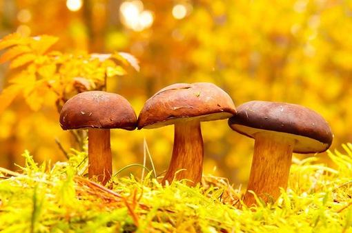 Trong tương lai có thể con người sẽ ở trong nhà làm từ… nấm
