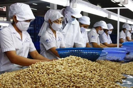 Làm chủ chế biến sâu nông sản, chinh phục thị trường nội địa và quốc tế