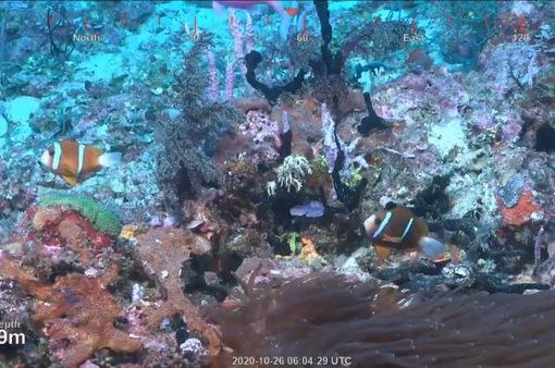 Phát hiện rặng san hô khổng lồ cao đến 500m tại Australia