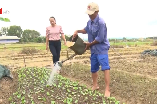 Dốc sức khôi phục sản xuất nông nghiệp sau lũ