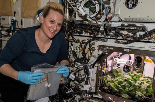 Phi hành gia... thu hoạch củ cải trên trạm ISS