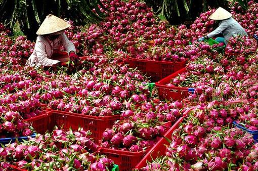 Để nông sản Việt có đầu ra bền vững