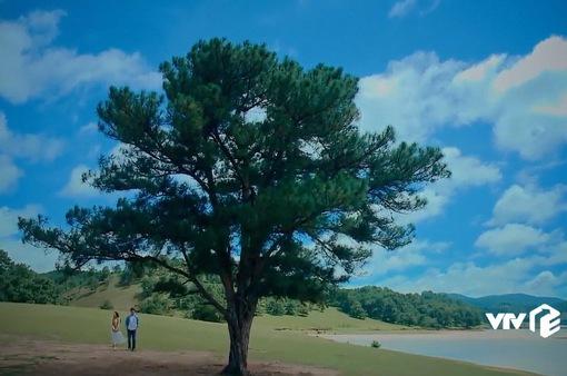 """Ngắm cảnh sắc Đà Lạt tuyệt đẹp trong phim """"Nước mắt loài cỏ dại"""""""