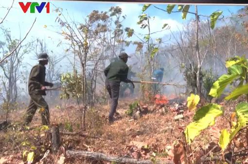 Cảnh báo cháy rừng ở Nam Bộ