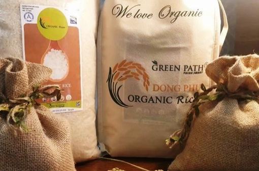 Liên kết sản xuất gạo hữu cơ, hướng tới xuất khẩu bền vững