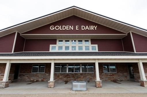 Nông dân Mỹ phải đổ hàng vạn lít sữa bò mỗi ngày