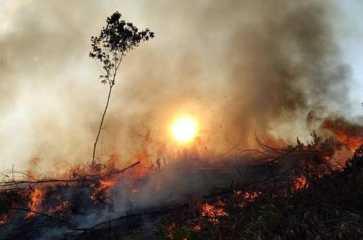 Đây là lý do rừng có nguy cơ cháy bất cứ lúc nào!