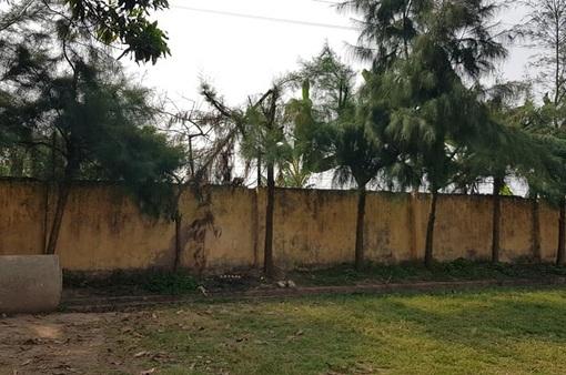 Nam sinh lớp 9 bị điện giật tử vong khi tỉa cây ở trường