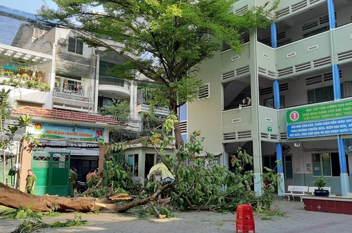 Trong 1 năm, 5 vụ tai nạn thương tích tại trường lớp: Từ cây đổ, điện giật đến bỏng lúc học