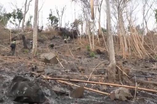 Yêu cầu xử phạt hành chính đối tượng thuê người đốt phá núi Voi