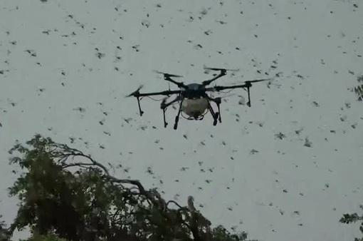 Sử dụng thiết bị bay không người lái để đuổi châu chấu tại Ấn Độ