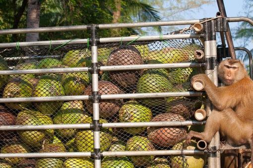 Hé lộ bí mật kinh hoàng của dầu dừa đối với môi trường