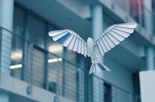 Đức phát triển robot bay được như chim
