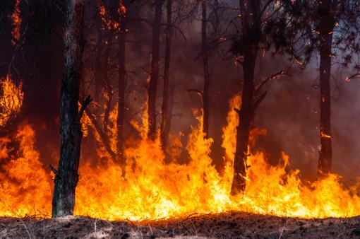 Công nghệ giúp phát hiện và cảnh báo cháy rừng sớm