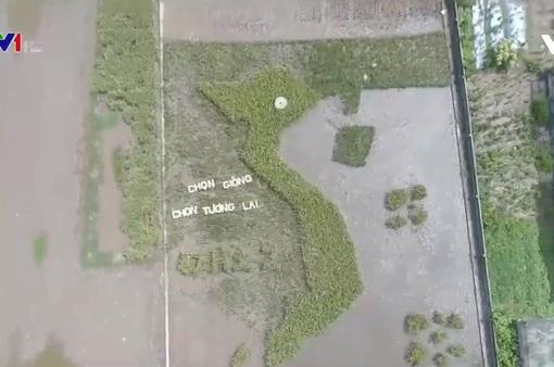 Cánh đồng lúa hình bản đồ Việt Nam