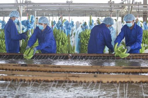 Số hóa nông nghiệp và bài học thực tiễn trên thế giới