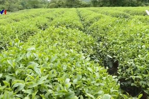 Hàng nghìn ha cây trồng hồi phục sau mưa