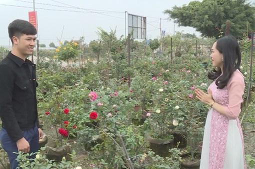 Người dân thôn Hạ Lôi hồi sinh những cánh đồng hoa đón Tết