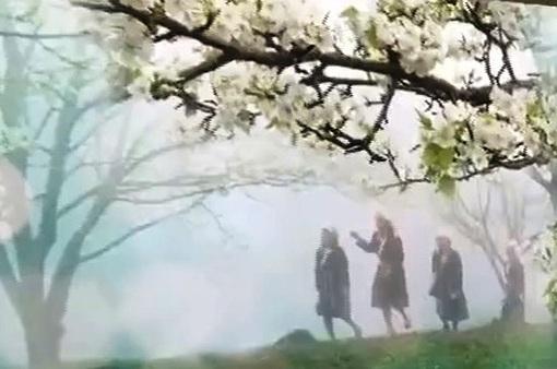 Quyến rũ mùa hoa lê ở vùng cao Tuyên Quang