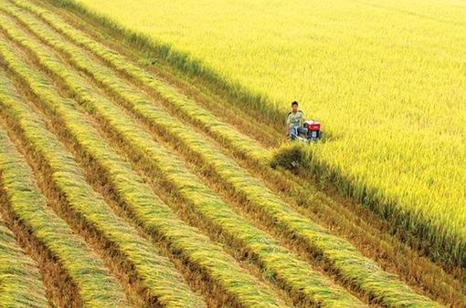 Thủ tướng đồng ý chuyển mục đích sử dụng 65 ha đất trồng lúa tại Long An