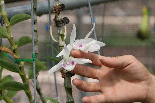 Chủ vườn lan đột biến bị tố lừa 200 tỷ đồng đến công an trình diện