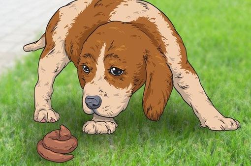 """""""Giải mã"""" 7 hành vi kỳ lạ hay gặp ở cún cưng"""