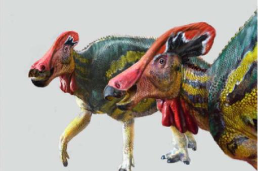 Phát hiện hóa thạch 72 triệu năm của khủng long mỏ vịt có mào dài hơn 1,3 m