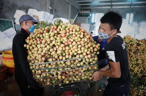 """Tiêu thụ nông sản trên nền tảng số: Để không còn phải """"giải cứu"""""""