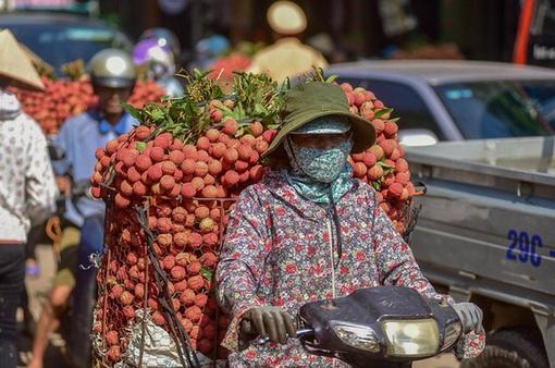 Vải thiều Bắc Giang khơi thông nhiều thị trường