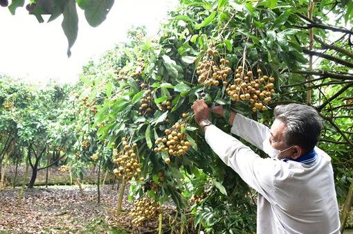 Hàng trăm hợp tác xã, DN sẽ tham gia kết nối tiêu thụ nông sản