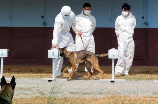 Chó phát hiện người mắc COVID-19 chỉ trong 10-15 giây