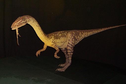 Chiếc đuôi dài giúp khủng long hai chân Coelophysis... chạy nhanh hơn
