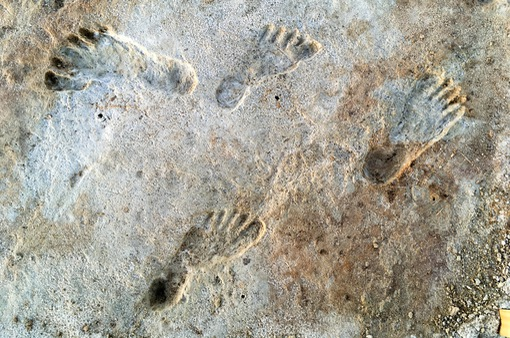 Tìm thấy bằng chứng cho thấy con người có mặt tại Bắc Mỹ từ 21.000 năm trước