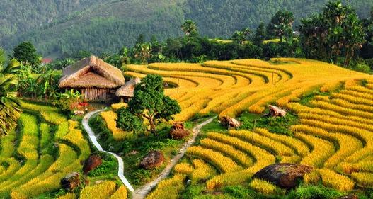 Ruộng bậc thang Việt Nam vào danh sách cảnh quan đẹp đến khó tin