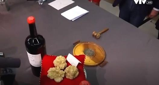 Nấm truffle trắng: Từ cuộc săn tìm kỳ công đến đấu giá xa xỉ