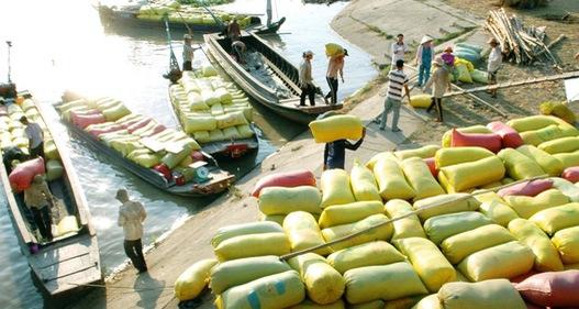 Giá gạo xuất khẩu Việt Nam tăng cao, vượt Thái Lan, Ấn Độ