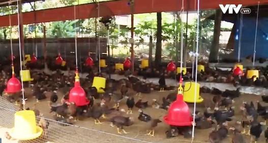 Đồng Nai: Hết khủng hoảng thịt heo lại lo vỡ quy hoạch chăn nuôi gia cầm
