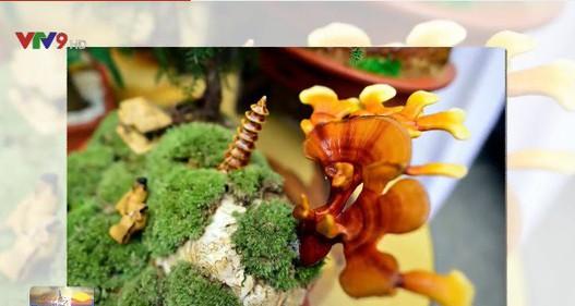 Nấm linh chi biến thành cây cảnh độc đáo trưng bày dịp Tết