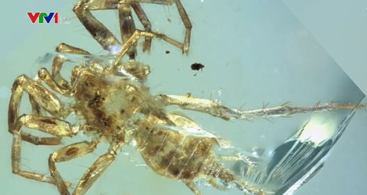 Phát hiện loài nhện có đuôi cách đây 100 triệu năm