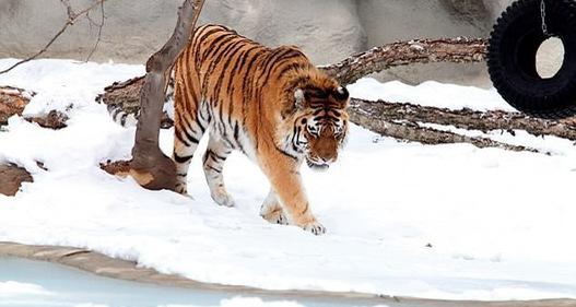 Du khách đến vườn thú được tặng hộp chứa 2kg chất thải động vật