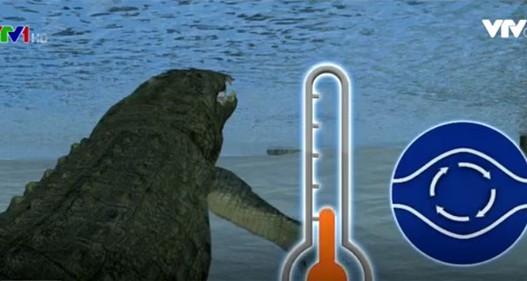 Cách sinh tồn độc đáo của cá sấu trong giá lạnh tại Mỹ
